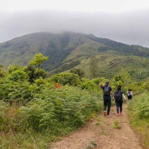 tadiandamol trek coorg sight seeing